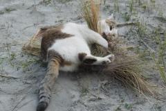 Animal antics: 2nd Bob Wright