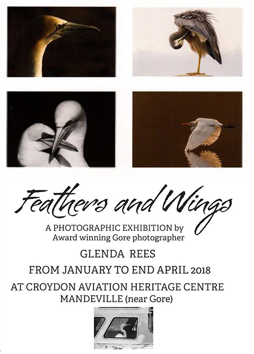 Glenda Rees: Feathers and Wings