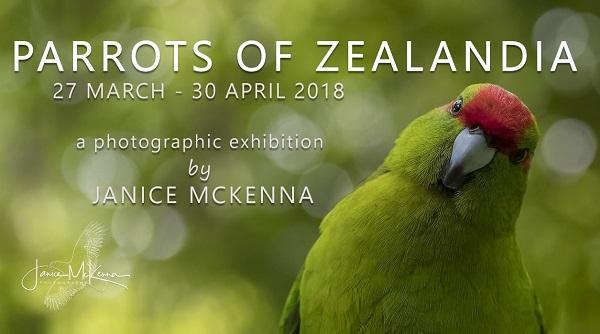Janice McKenna: Parrots of Zealandia