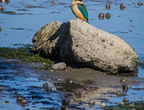 Lower Avon River & Estuary Walk – 22nd Aug 2018