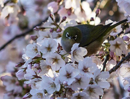 Christchurch Botanic Gardens – 8th Sept 2018