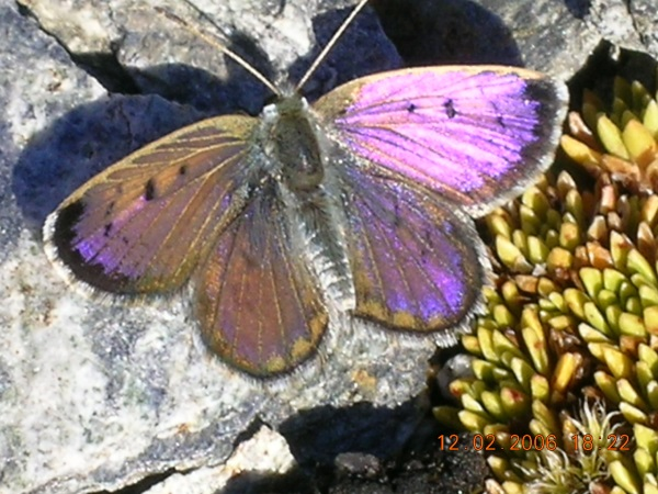 Brian Patrick: Butterfly