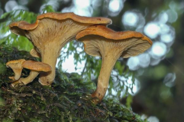 Ken Muscroft-Taylor: Fungi