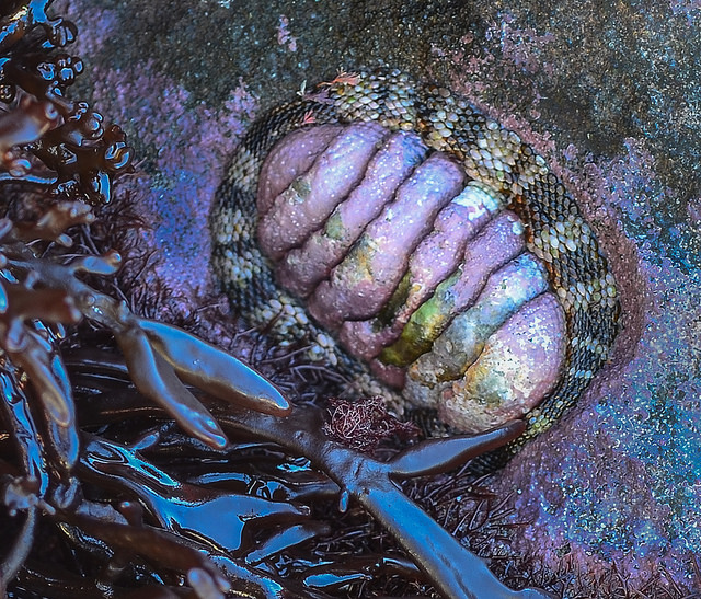 Barry Dench - Chiton